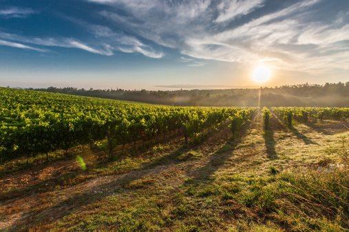 Puglia Countryside