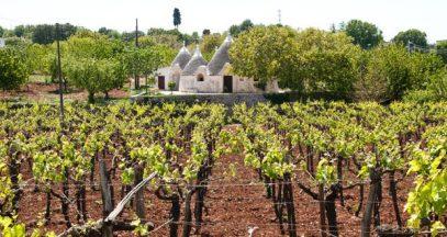 Puglia Vineyards